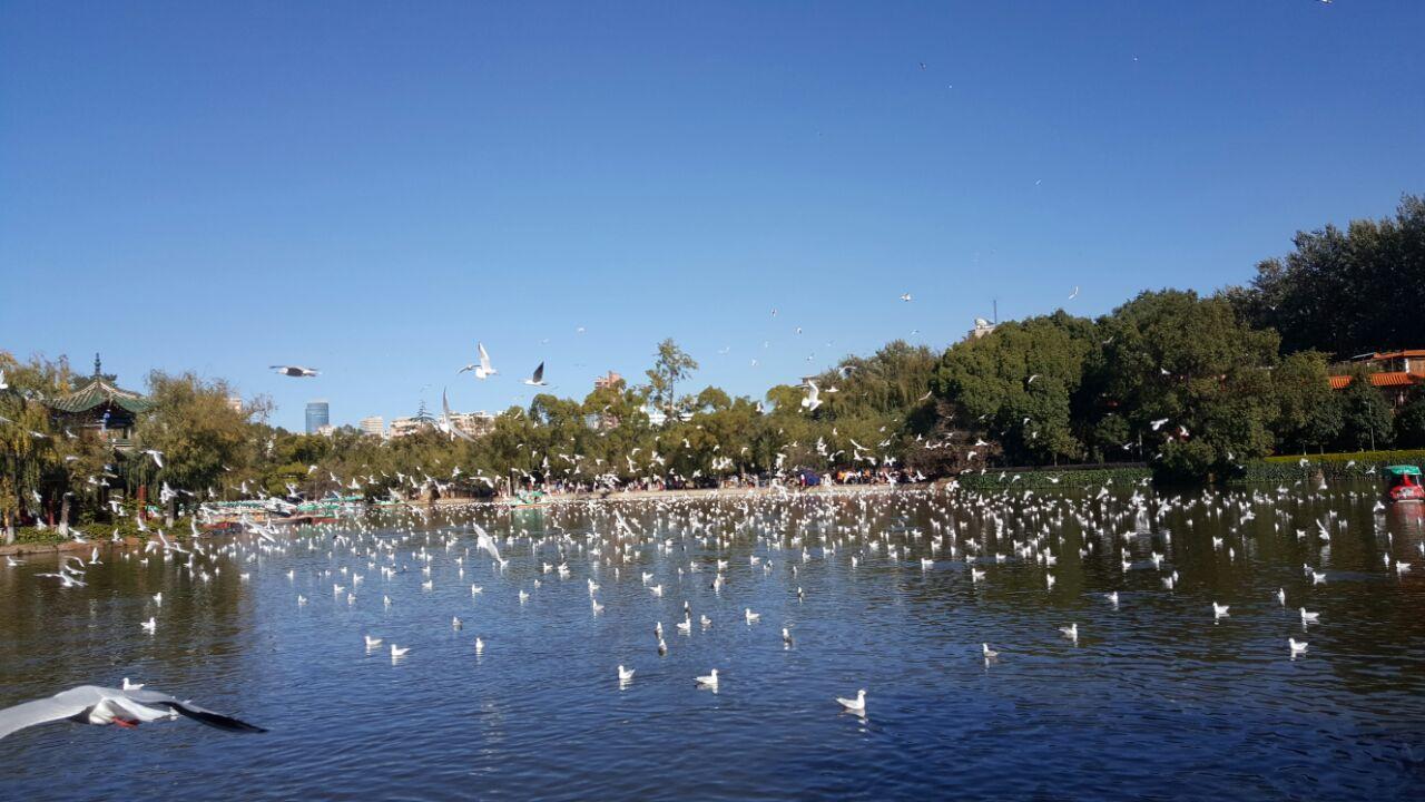 翠湖公园有寄存行李的地方吗?