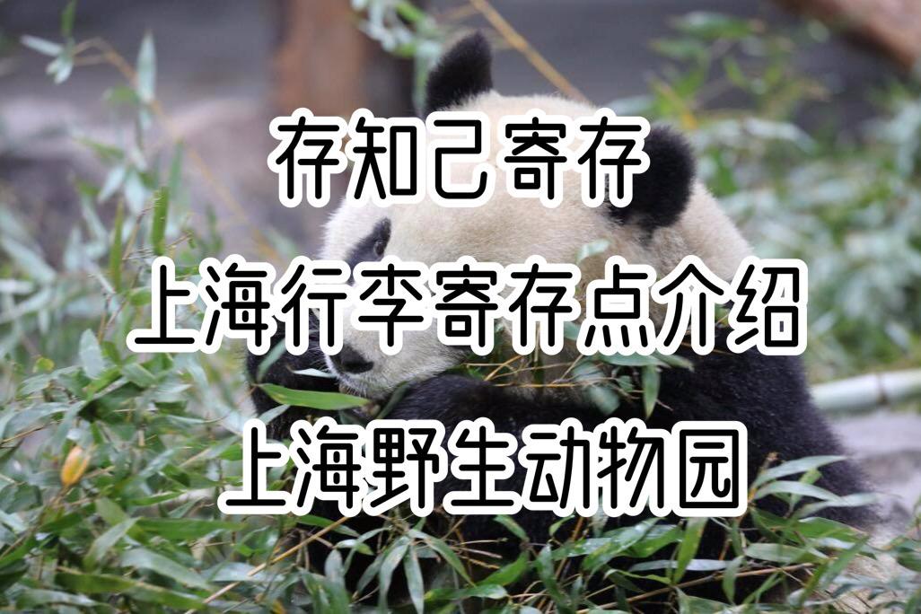 存知己上海野生动物园行李寄存点介绍