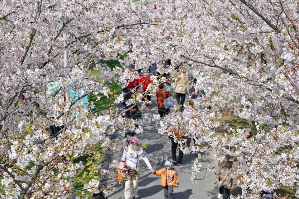 樱花公园有寄存行李的地方吗?
