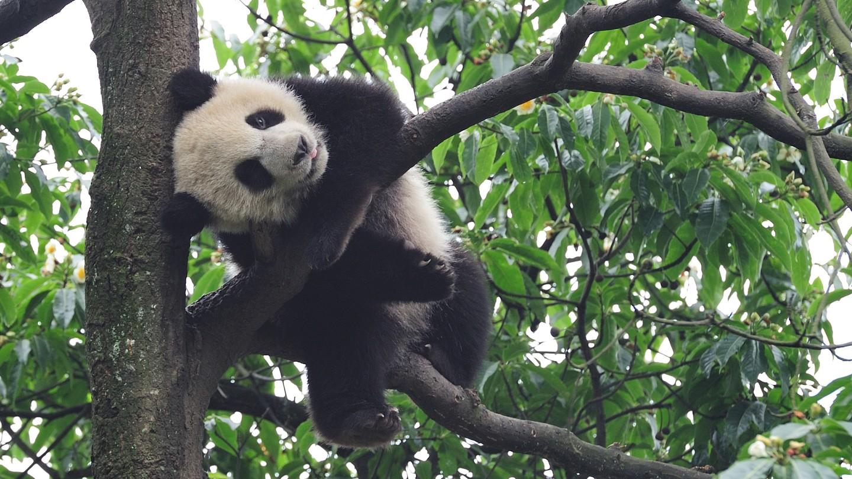 成都熊猫基地有寄存行李的地方吗?
